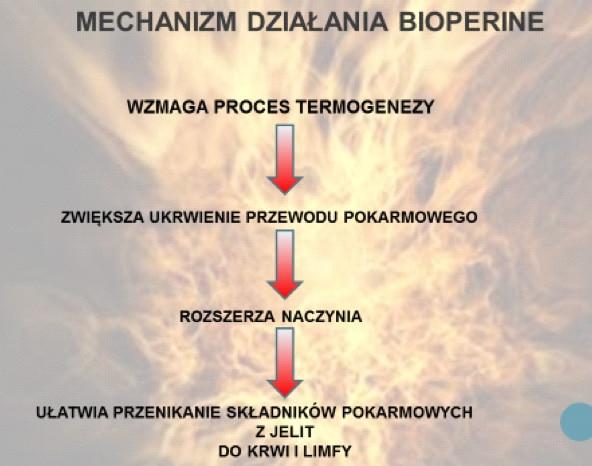 mechanizm_dzialania_bioperine
